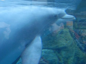 One of the dolphins!